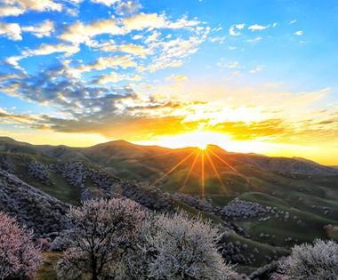 新源县吐尔根乡3万亩野杏花开放美如画