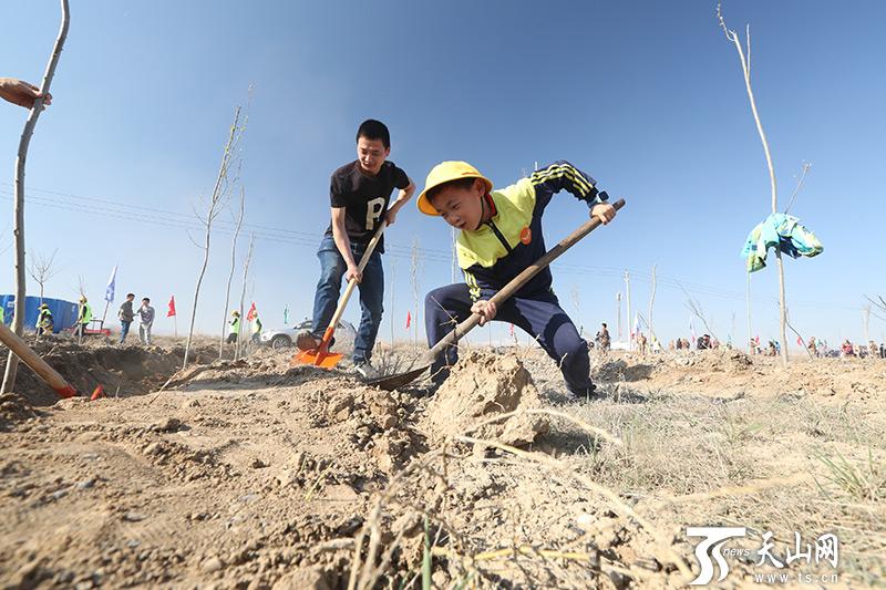 众人植树树成林 2019年新疆已完成造林绿化76.7万亩