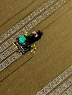 40余万亩棉花开播