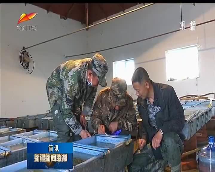 兵团繁育额尔齐斯河特种冷水鱼