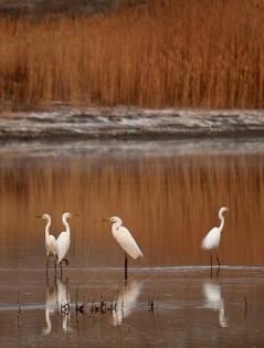 古海公園白鷺棲