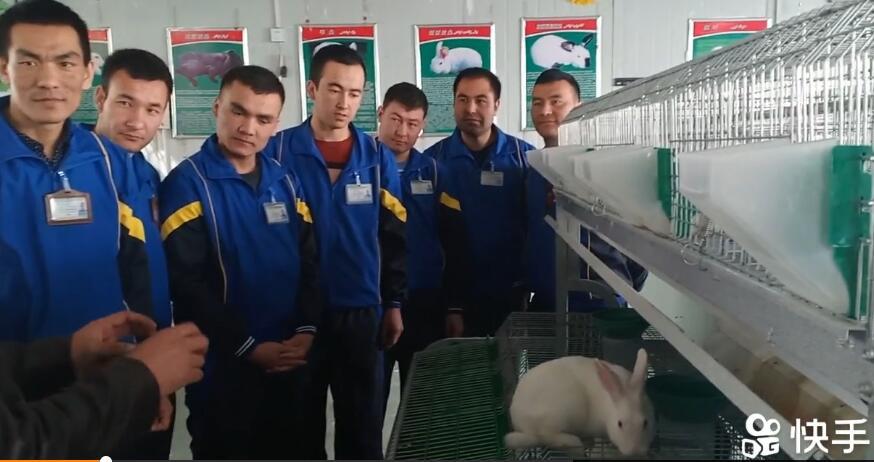 在教兔子的养殖技术