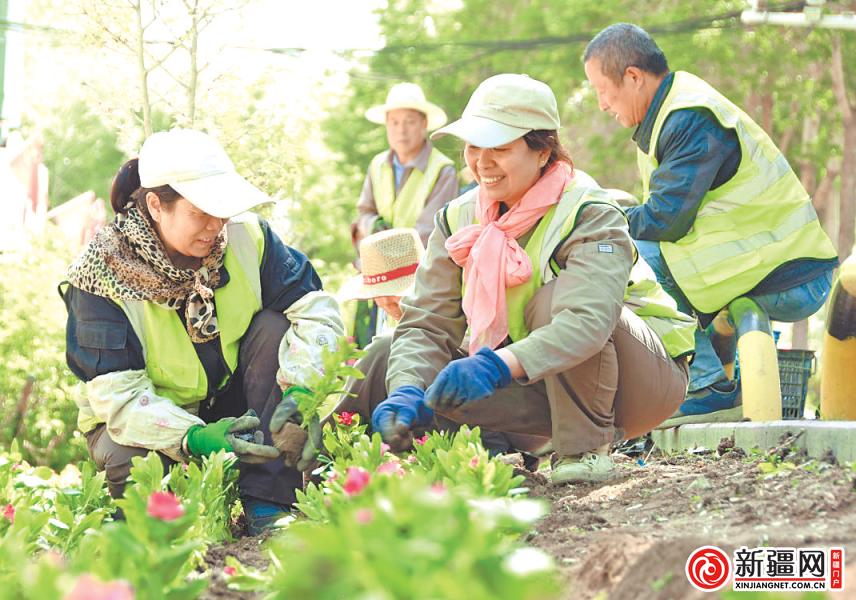 米东区25条街道打造花卉新景观