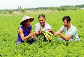 温宿县1.17万亩夏季蔬菜长势喜人