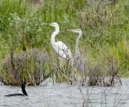 新疆乌伦古湖:鸥鸟翔集