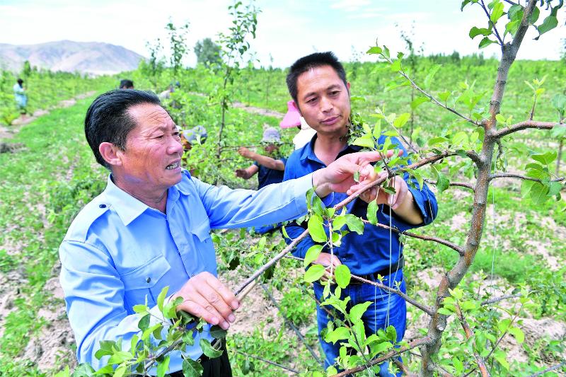 林果经济 促农增收