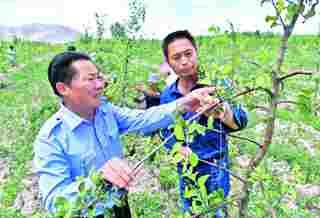 新源县:林果经济 促农增收