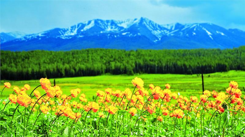 来新疆,陪你一起看草原