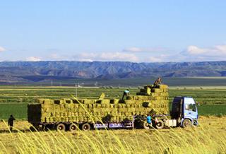 裕民縣:發展草產業助農增收