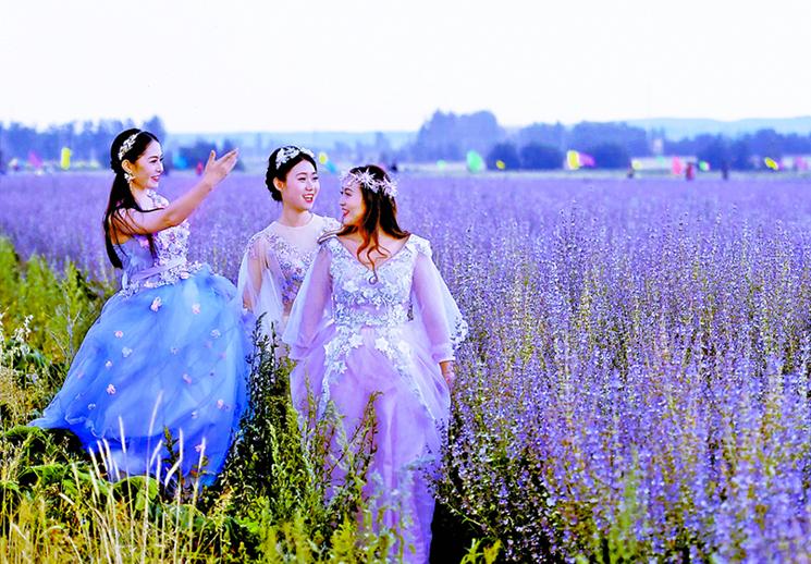 溫泉香紫蘇引遊人