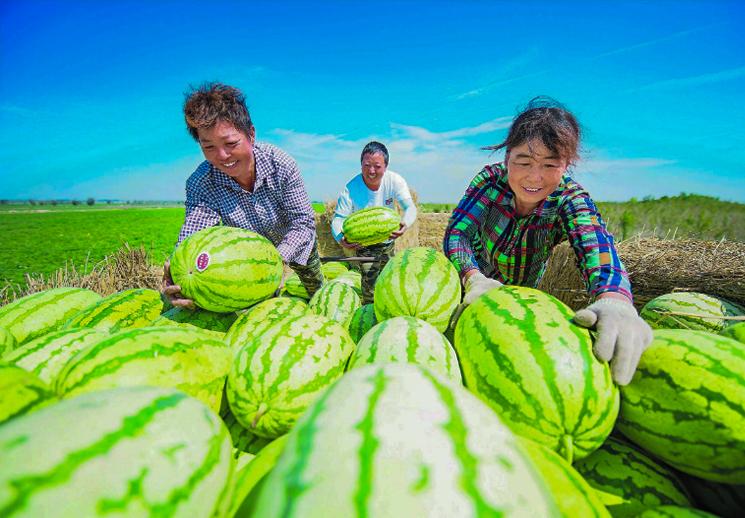 盛夏的新疆 流蜜的季節