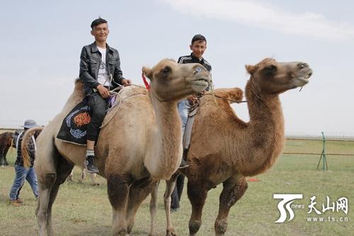 瞧这哥俩儿!骑着骆驼像风一样奔跑在巴里坤草原