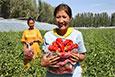 订单蔬菜促增收