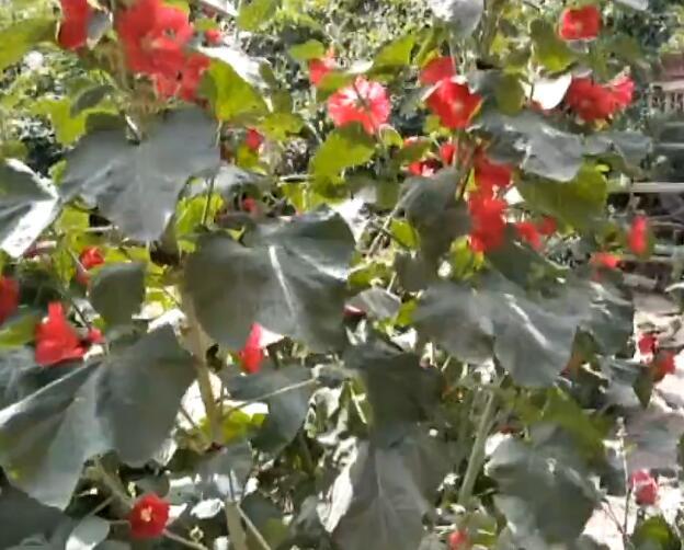 这是我家的果园!