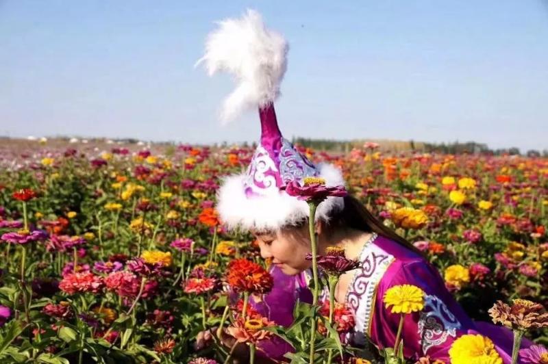 八月赏花去哪里?新疆这片花海等着你
