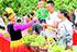 和田县葡萄成熟吸引游客采摘