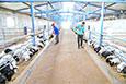 養殖合作社助農增收