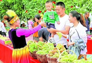 【新疆是个好地方】葡萄熟 游客到