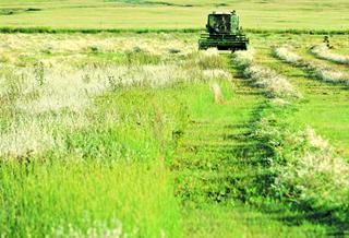 哈密牧草喜丰收