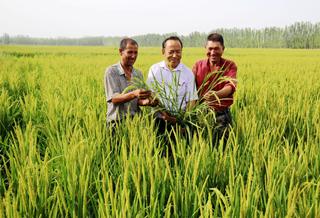 温宿县:水稻抽穗 丰收在望