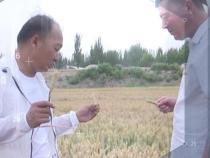 新疆农科院