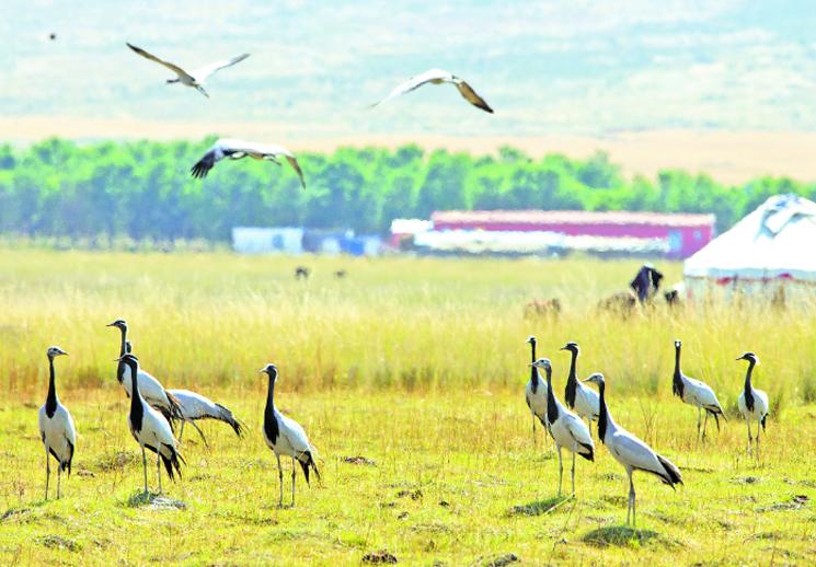 【新疆是個好地方】巴里坤湖迎來大批候鳥