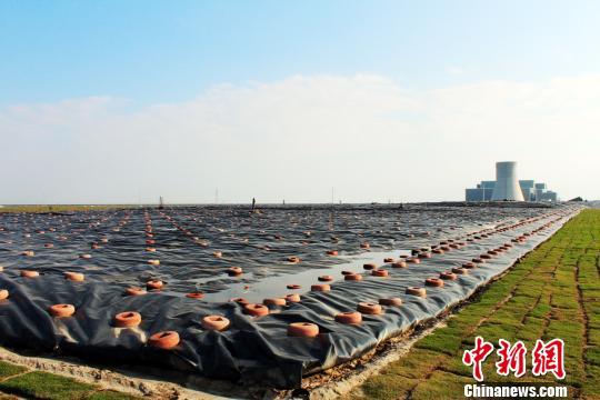 """上海实现原生生活垃圾""""零填埋""""将建生态环保基地"""