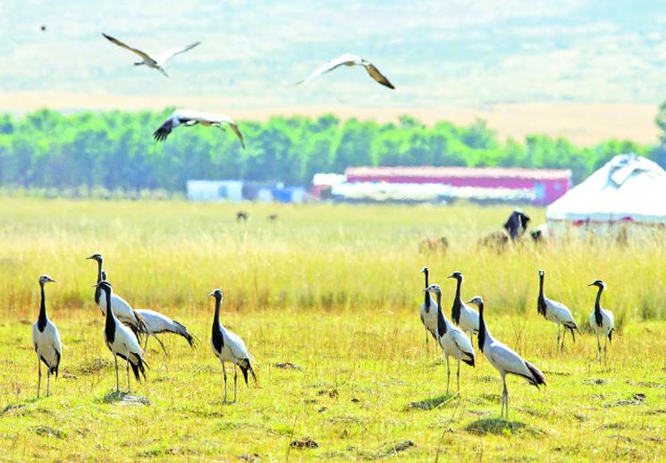 【新疆是个好地方】巴里坤湖迎来大批候鸟