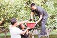 库尔勒市:工作队帮村民采收香梨