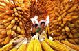 中国农民丰收节,致敬农民????