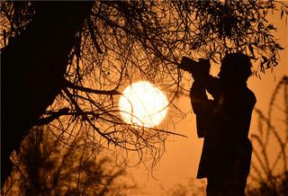 新疆塔里木盆地秋意漸濃