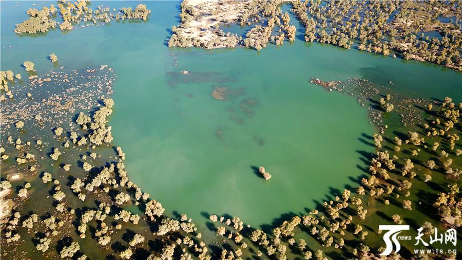 雨后新疆塔里木河湿地出现五彩斑斓景象