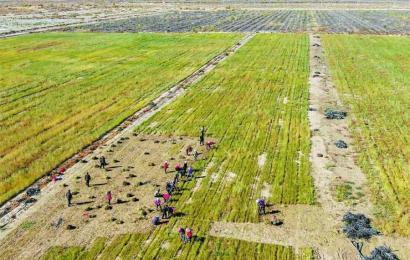 呼图壁县:荒漠添新绿