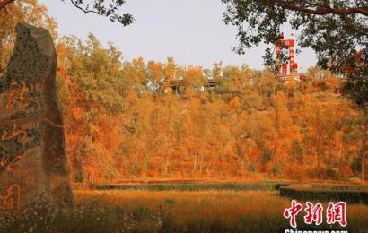 """新疆库尔勒十万亩山林""""披黄着金"""" 呈现""""醉""""美秋色"""