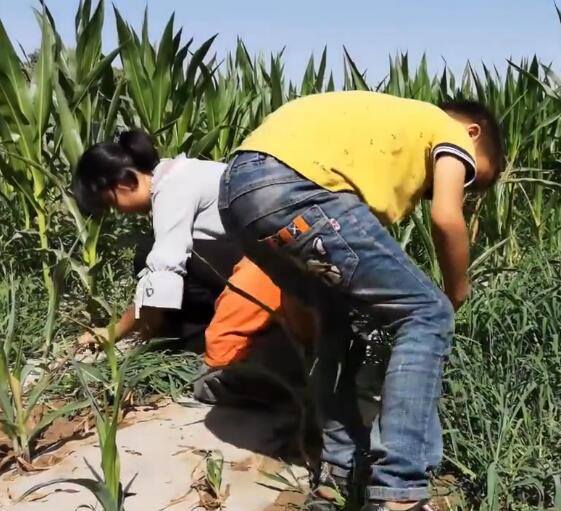 跟大家一起把田里的杂草清了,孩子有劲儿
