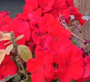 二十八盘水磨赏花