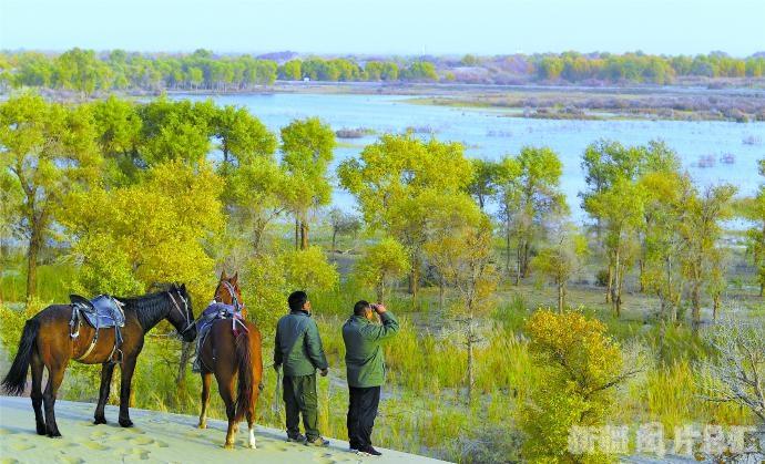 【天山守望】又到胡杨金黄时——塔里木河下游生态输水掠影