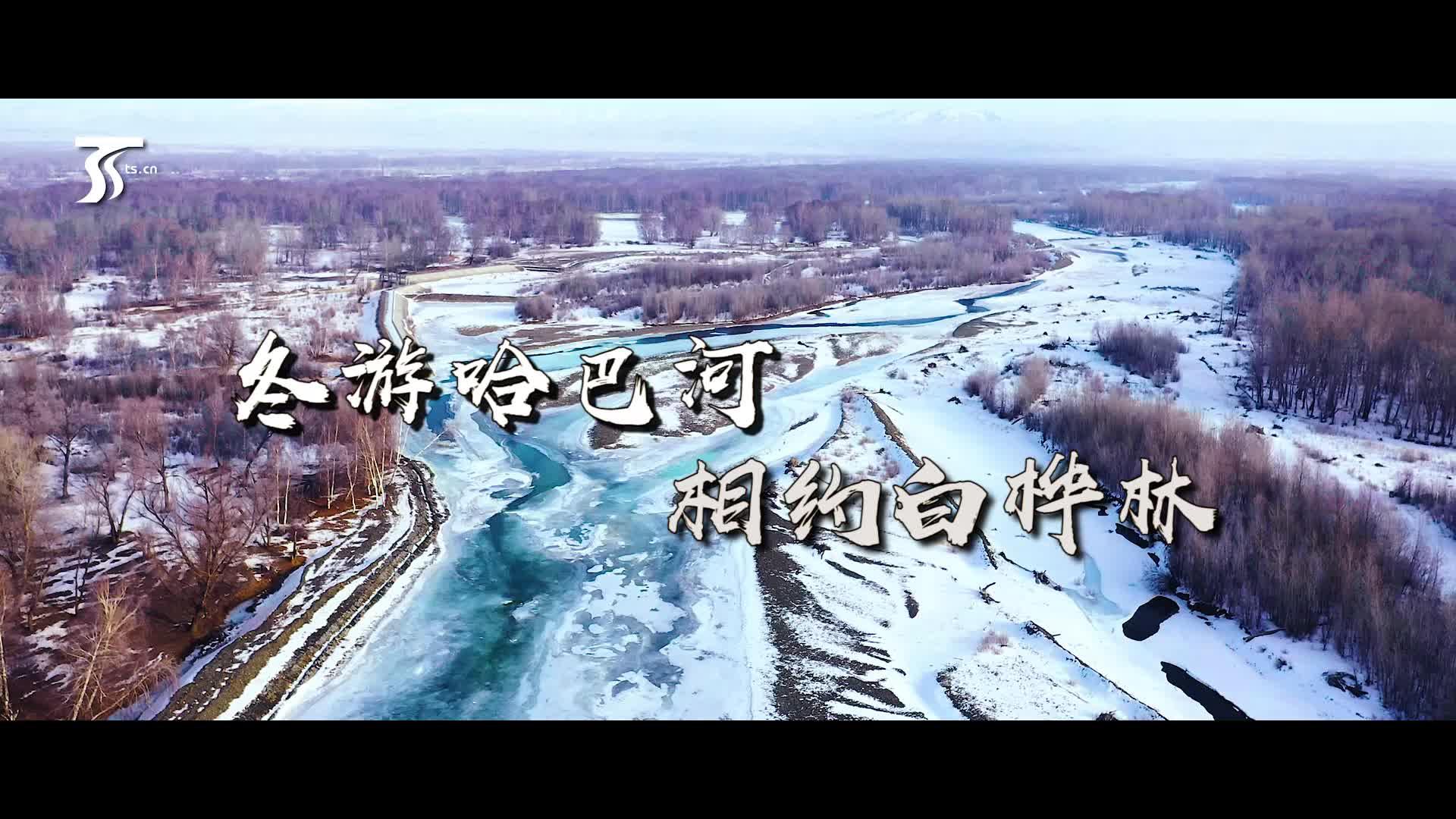 冬游哈巴河 相约白桦林
