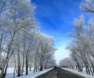 【疆遇风光】哈巴河雪桦之旅——观雾凇美