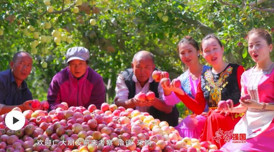 """第一书记晒丰收:我为巩留""""三香红""""苹果代言"""