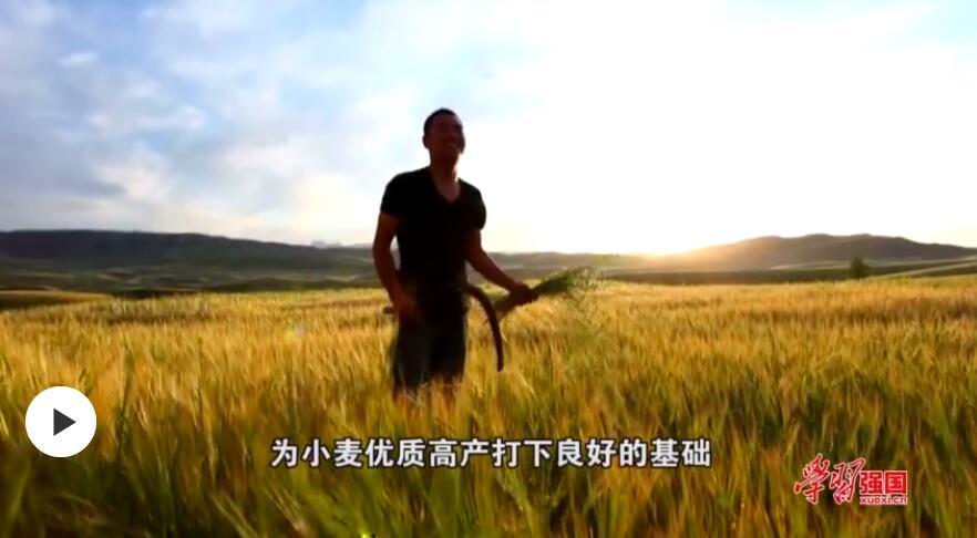第一书记晒丰收:我为腰站子村有机农产品代言