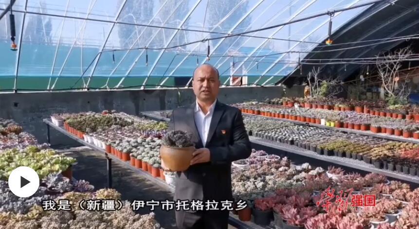 第一书记晒丰收:我为上托格拉克村花卉基地多肉植物代言