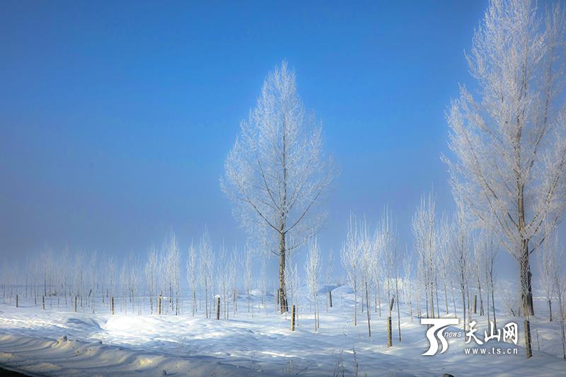 昭苏高原出现雾凇景观