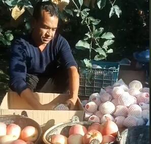 麦麦提通过培训期间学到的果园管理技术,增加了家庭收入