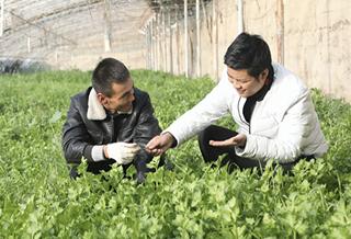 乌什县:发展温室大棚促增收