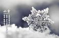 小雪来了,飞雪如花落 岁岁又年年
