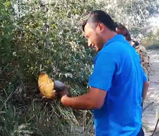 在阿不拉家摘蘑菇