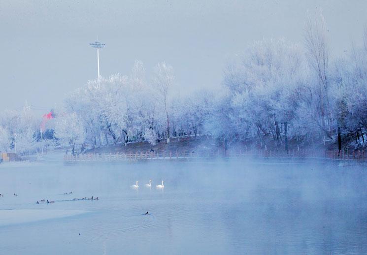 精河县上演绝美雾凇:雾气飘渺 天鹅野鸭水中舞翩跹