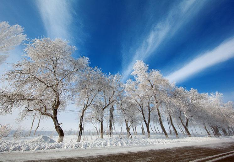 雪沃新疆丨昭苏草原雾凇花开宛如童话世界