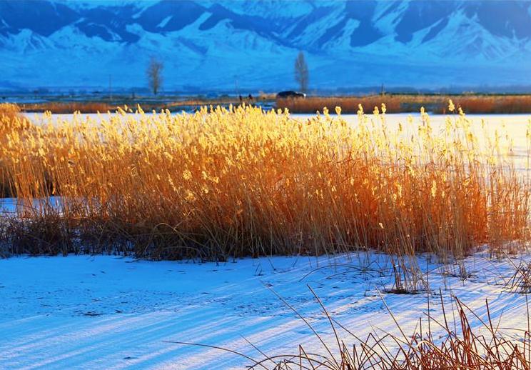 【疆遇风光】巴里坤高家湖湿地冬日静谧时光